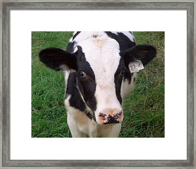 Hello My Name Is Cow Framed Print by Joseph Skompski
