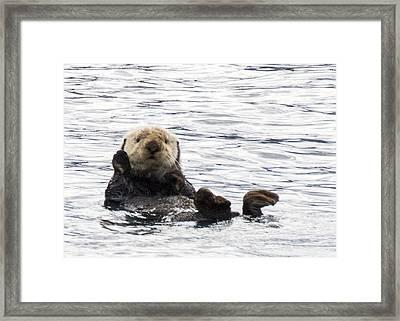 Hello Otter Framed Print by Saya Studios