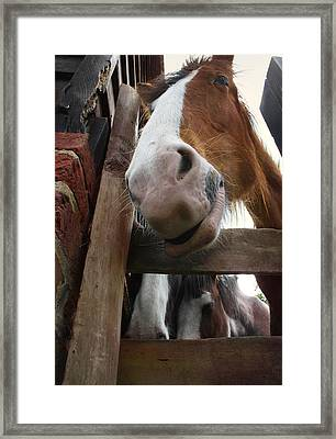 Hello Framed Print by Stephen Norris