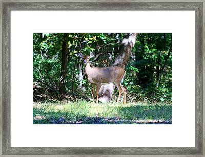 Hello Thanks For Looking Framed Print