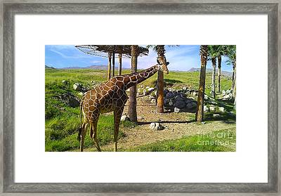 Framed Print featuring the photograph Hello There by Chris Tarpening