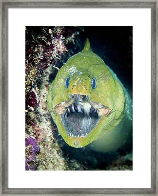 Hello There Framed Print by Jean Noren