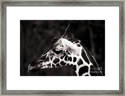 Framed Print featuring the photograph Hello Up There by Doc Braham