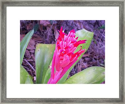 Framed Print featuring the photograph Hello World by Belinda Lee