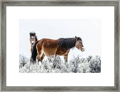 Hello Framed Print by Yeates Photography