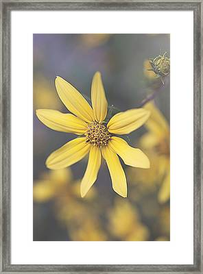 Hello Yellow Framed Print by Faith Simbeck