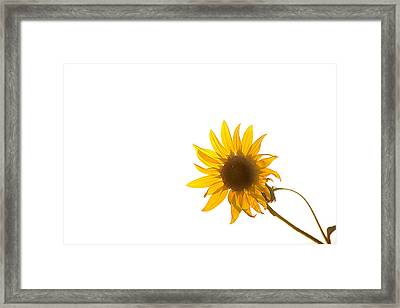 Hello Yellow Framed Print by Peter Tellone