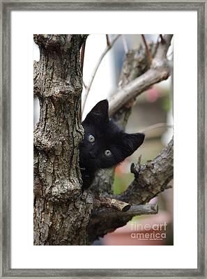 Helloooo Framed Print by Tannis  Baldwin