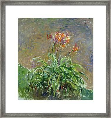 Hemerocallis, 1914-17 Framed Print by Claude Monet