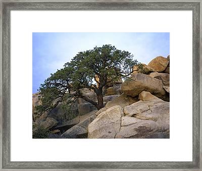Hemingway Tree Framed Print
