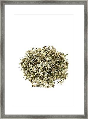 Hemlock Bark Herb Framed Print by Geoff Kidd/science Photo Library