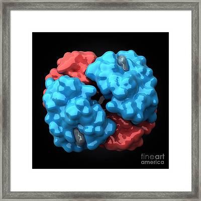 Hemoglobin Molecule, Artwork Framed Print