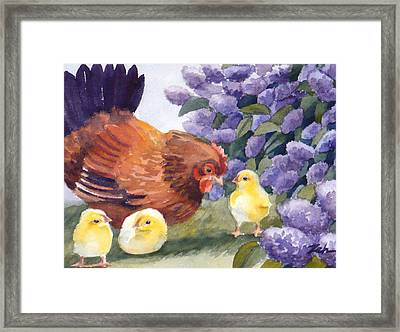 Hen And Chicks Chicken Art Framed Print