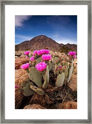 Henderson Canyon Beavertail Framed Print