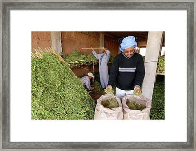 Henna Farming Framed Print by Thierry Berrod, Mona Lisa Production