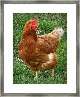 Henny Penny Framed Print