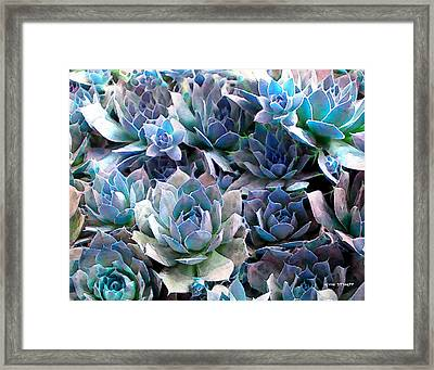 Hens And Chicks Series - Evening Light Framed Print