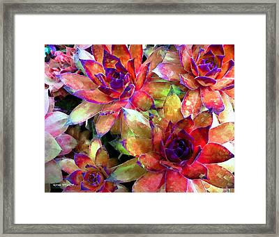 Hens And Chicks Series - Garden Brass Framed Print by Moon Stumpp
