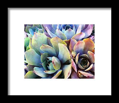 Desert Flowers Framed Prints
