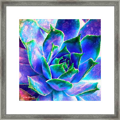 Hens And Chicks Series - Touches Of Blue  Framed Print by Moon Stumpp