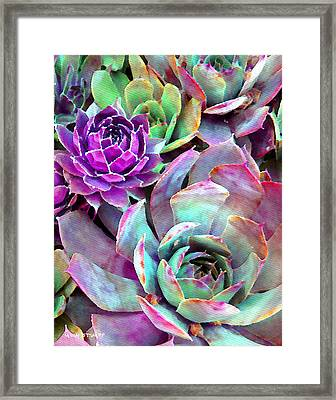 Hens And Chicks Series - Urban Rose Framed Print by Moon Stumpp