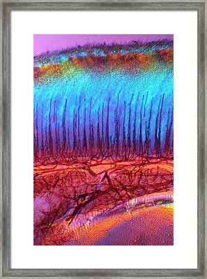 Hen's Tongue Framed Print by Steve Lowry