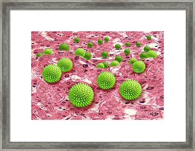 Hepatitis B Infecting Liver Tissue Framed Print