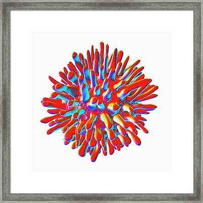 Hepatitis C Framed Print by Mehau Kulyk