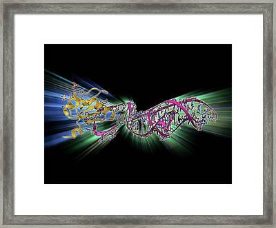 Hepatitis D Virus Ribozyme Complex Framed Print by Laguna Design