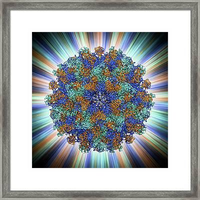 Hepatitis E Virus Capsid Framed Print by Laguna Design