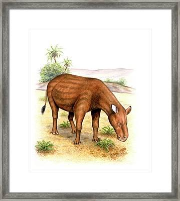 Heptodon Prehistoric Mammal Framed Print by Deagostini/uig
