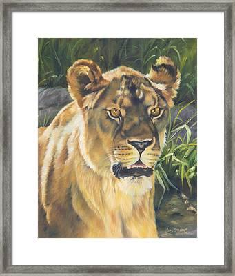 Her - Lioness Framed Print