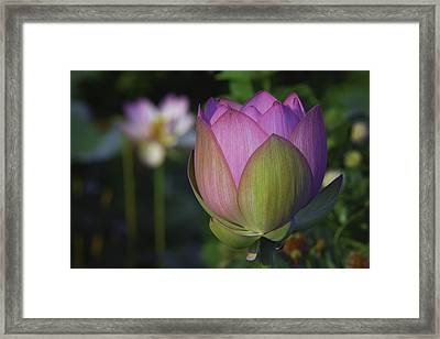 Framed Print featuring the photograph Her Majesty by Cindy Lark Hartman