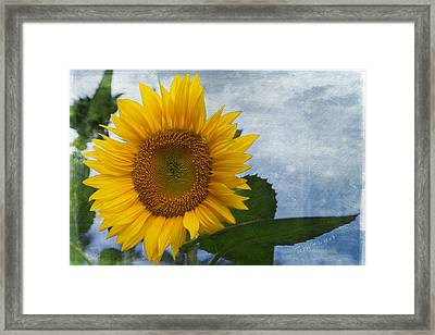 Her Majesty Framed Print by Terri Harper