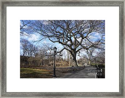 Her Majesty The Tree Framed Print