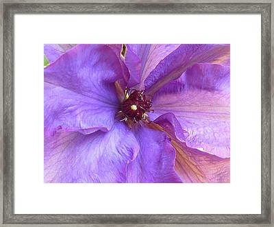 Her New Ruffled Dress Framed Print by Connie Handscomb