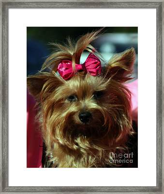 Her Pinkness Framed Print by Steven  Digman