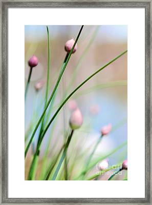 Herb Garden Framed Print by Kim Fearheiley