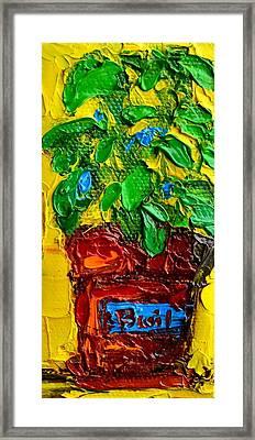 Herbal Plant Basil Framed Print by Patricia Awapara