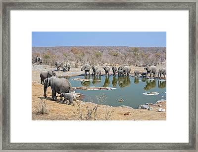 Herd Of African Elephants Drinking Framed Print by Tony Camacho