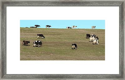 Herd Of Cows Grazing On A Hill, Point Framed Print