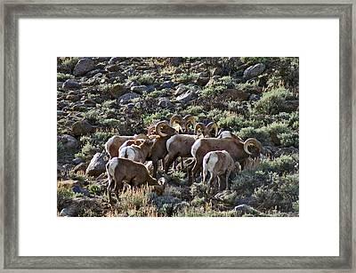 Herd Of Horns Framed Print