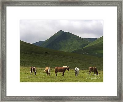 Herd Of Horses. The Sancy Massif. Auvergne. France. City Framed Print