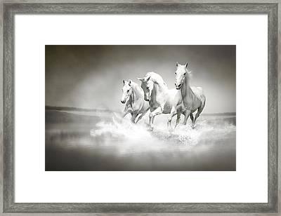 Herd Of White Horses Running Through Water Framed Print