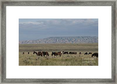 Herd Of Wild Horses Framed Print by Juli Scalzi