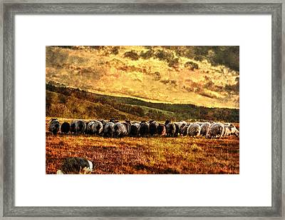 Herding Framed Print by Sabine Peters
