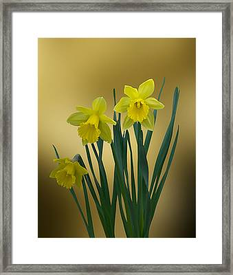 Framed Print featuring the photograph Here Comes Spring... by Judy  Johnson