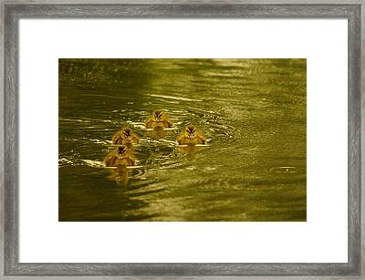 Here Comes The Little Bread Beggers Framed Print