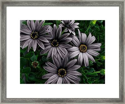 Here Comes The Night  Framed Print by Steve Taylor