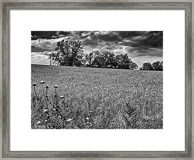 Here Comes The Storm Framed Print by Arik Baltinester